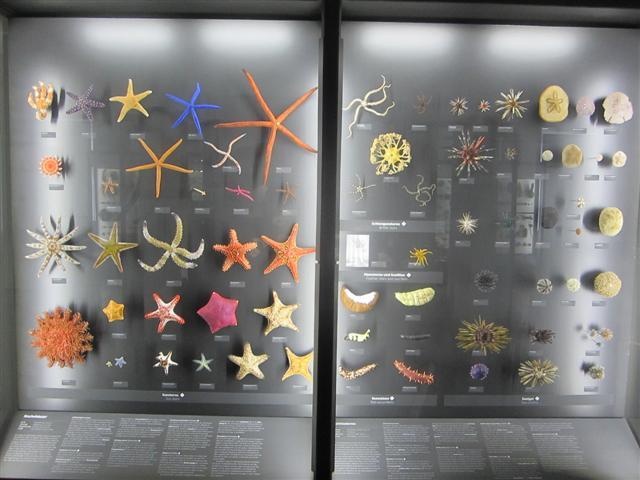 historisches museum frankfurt: naturwiss. Sammlung im Museum Wiesbaden