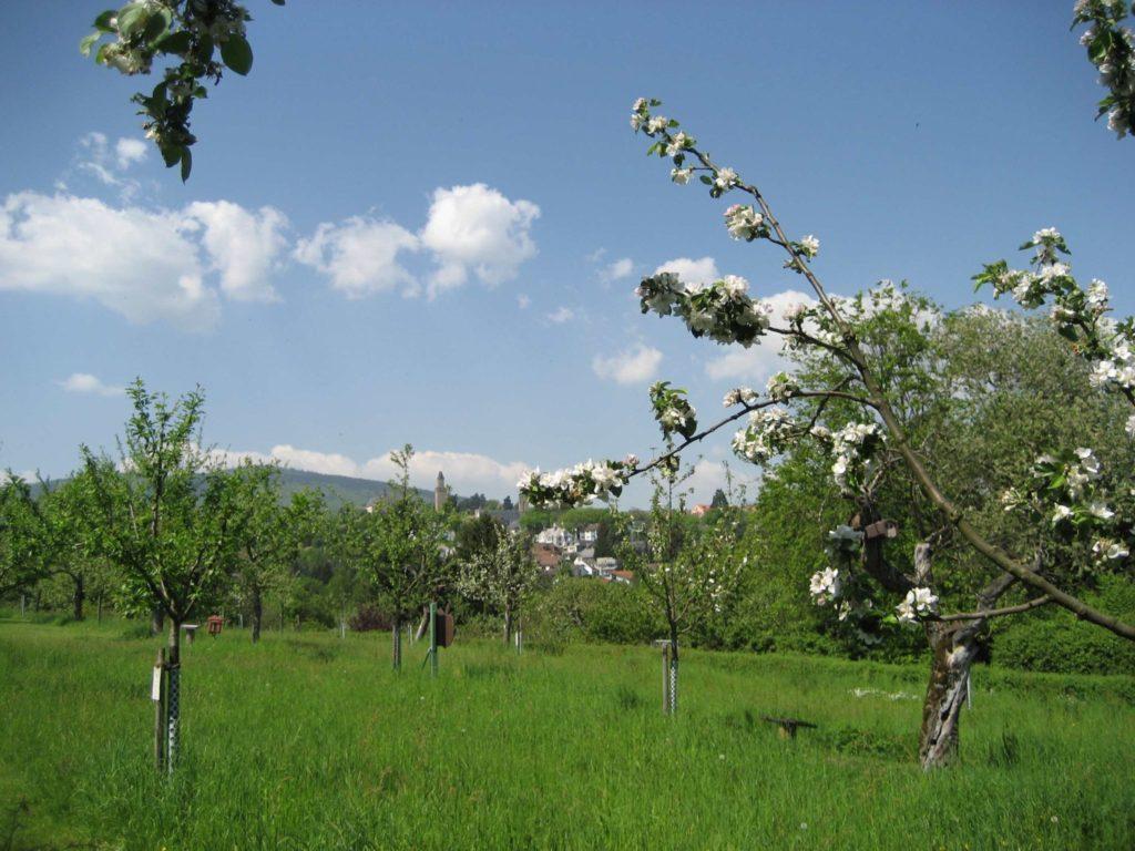 Blick in eine Frühlingslandschaft bei kronberg