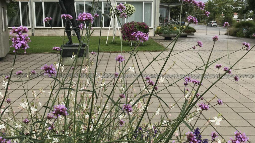 Blick auf eine geschwungene Halle, im Vordergrund lila Blumen (Eisenkraut)