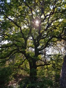 Baum, dahinter die Sonne