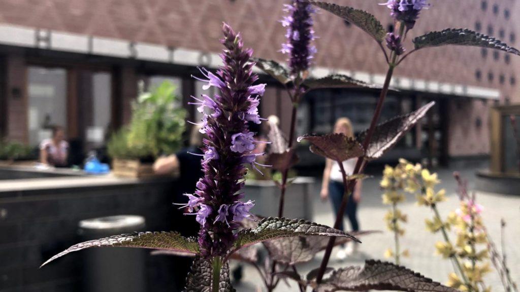 Blüten, im Hintergrund die Fassade des historischen Museums